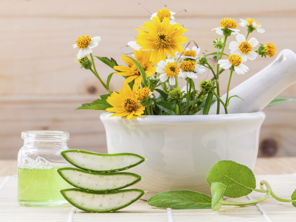 Plants that pamper our skin. Natural cosmetics rule again!