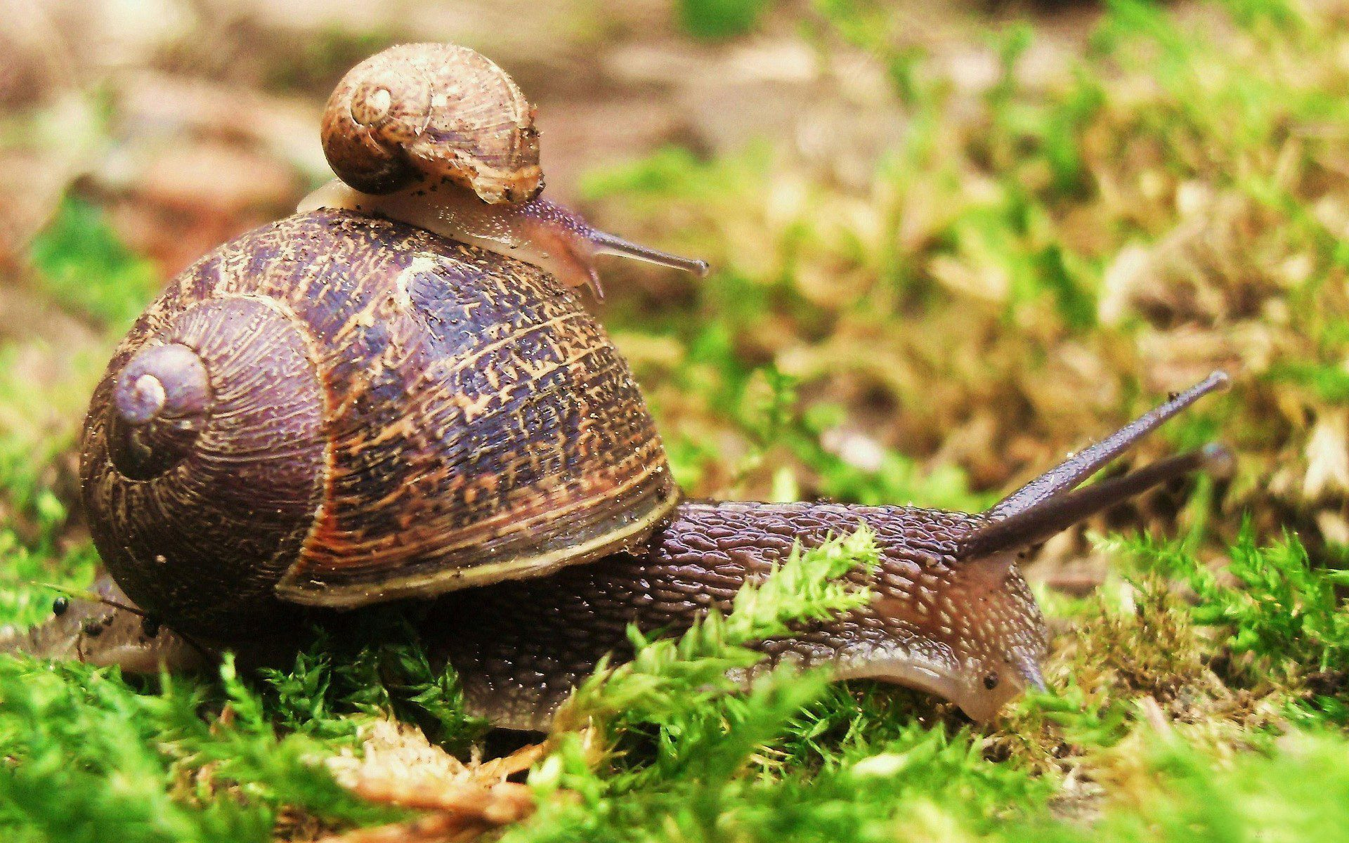 How do snail slime cosmetics really work?
